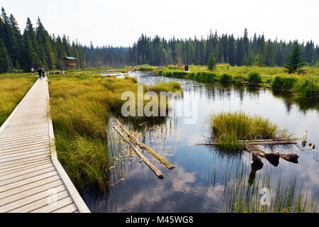 Beaver Boarkwalk Hinton , Canada Photo Stock