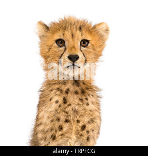 Gros plan sur un trois mois cheetah cubs, isolated on white Photo Stock