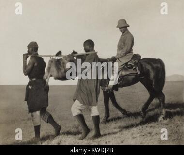 Theodore Roosevelt rides accanto africana di facchini che trasportano una pelle di leone torna a camp, June-Dec. Immagini Stock