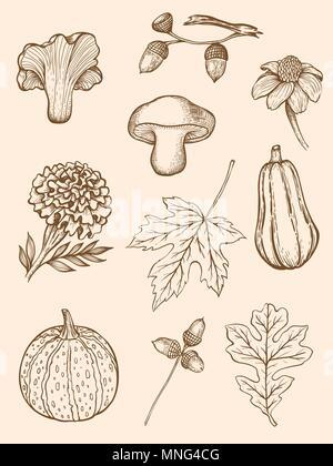 Set di disegnato a mano autunno decorativi elementi di design in stile vintage. Immagini Stock
