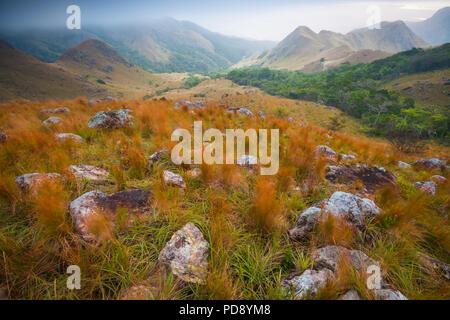 Foschia mattutina in Altos de Campana national park, versante pacifico, Repubblica di Panama. Immagini Stock