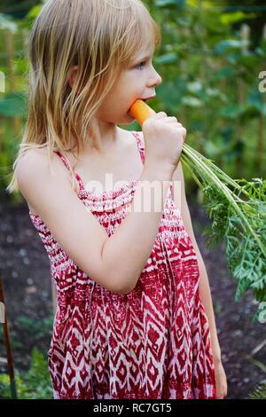 Ragazza di mangiare la carota nel campo Immagini Stock