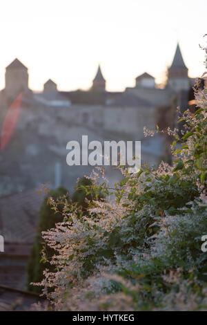 Inquadratura sfocati del castello di kamianets-podilskyi in Ucraina occidentale. focus su una boccola di fioritura Immagini Stock
