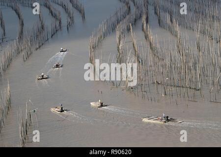 Cina, Fujiang Provincia, Xiapu County, pesca poli, bambù con la bassa marea, bambù utilizzato per la pesca, acquacoltura Immagini Stock