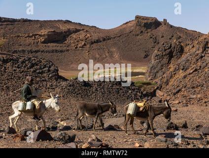 Il nomade Bisharin uomo con asini la raccolta di sale nel cratere Atrun, Bayuda desert, Atrun, Sudan Immagini Stock