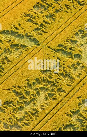 Vista aerea del campo coltivato Immagini Stock