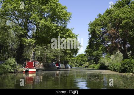 Narrowboats ormeggiata sulla riva del fiume Wey navigazioni, Surrey. Immagini Stock