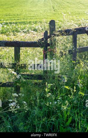 Vecchi cancelli in legno in un campo del Cotswolds, Gloucestershire, Inghilterra Immagini Stock