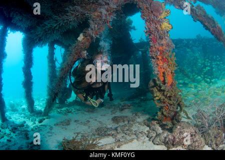 Scuba Diver esplora il relitto di flagler la chiatta. Immagini Stock