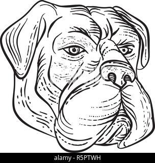 Lo stile di attacco illustrazione di un bullmastiff, una grande domestico di razza del cane, con struttura solida e muso corto come il cane dei Molossi fatto sul raschiatore Immagini Stock