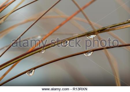 Close-up shot natura di gocce di acqua su un piante Immagini Stock