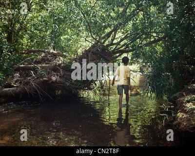 Ragazzo wades lungo il torrente attraverso boschi bush, Nuova Zelanda. Immagini Stock