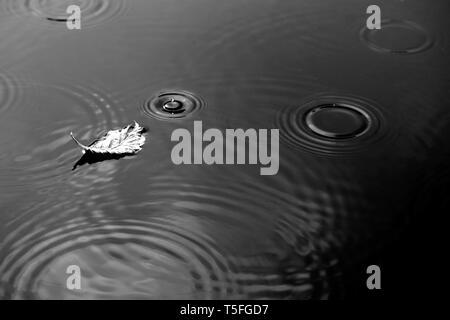 La fotografia di una superficie di acqua in autunno con una singola foglia secca sotto la pioggia. Immagini Stock