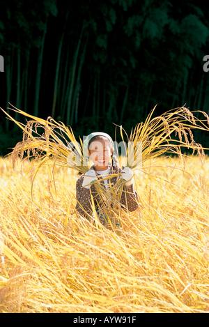 Ragazza la mietitura del riso Immagini Stock