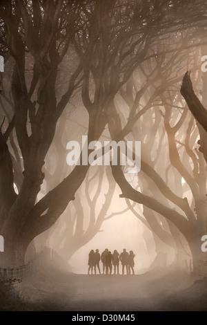 Ombra di persone sotto il buio siepi, Irlanda del Nord. Immagini Stock