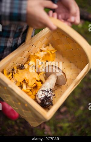 Bambino cestello di contenimento con funghi Immagini Stock