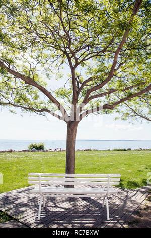 Banco di vuoto e di albero su di un patio con vista mare in background Immagini Stock
