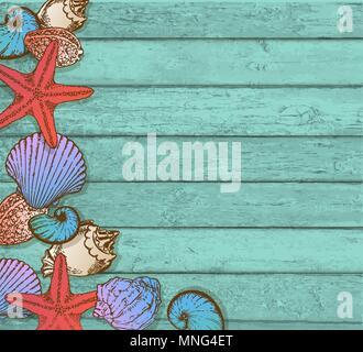 Disegnato a mano conchiglie di mare su un verde sullo sfondo di legno. Immagini Stock