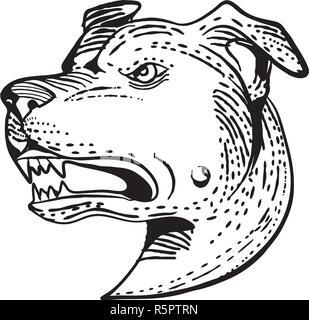 Lo stile di attacco illustrazione della testa di un arrabbiato American Staffordshire Terrier, Amstaff,Staffy o Staffie, una di medie dimensioni, corto-rivestito di razza del cane fatto Immagini Stock