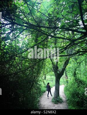 Una donna femmina passeggiate nella foresta nella Sierra de Grazalema, Andalusia, Spagna Immagini Stock