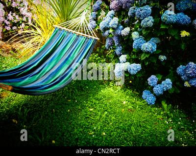 Estate in Nuova Zelanda: blu amaca, Prato e ortensia. Immagini Stock