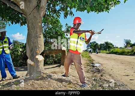 Lavoratori tagliando un albero in Manyama, Zambia. Immagini Stock