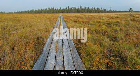 Colori autunnali in Lapponia, vicino al confine della Finlandia e Russia. In legno percorso trekking attraversa Immagini Stock