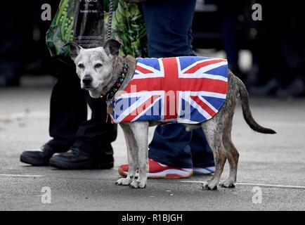 Weymouth Dorset, Regno Unito. Xi Nov, 2018. Ricordo che il servizio domenicale e corteo di Weymouth Dorset, Regno Unito. Un cane in un Unione Jack rivestire Credito: Finnbarr Webster/Alamy Live News Immagini Stock