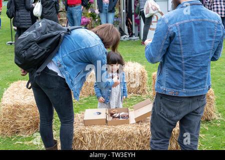 Ragazza giovane essendo offerto brownie al cioccolato al Parco Stonor food festival. Stonor, Henley-on-Thames, Oxfordshire, Inghilterra Immagini Stock
