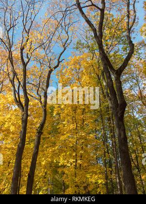 Colorate e luminose sfondo costituito di caduto foglie di autunno. Immagini Stock