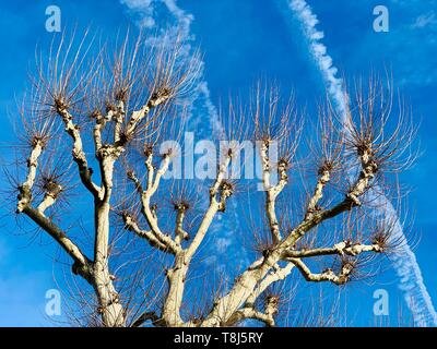 Basso angolo di visione di un albero, Italia Immagini Stock