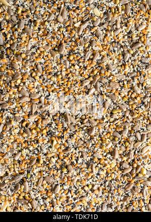 Sullo sfondo di un girasole e semi di lino, grano saraceno, chia, noce di cocco e semi di sesamo. Immagini Stock