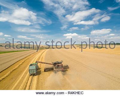 Antenna di raccolto di overhead di mietitrebbia estate taglio campo di grano raccolto in agriturismo Immagini Stock