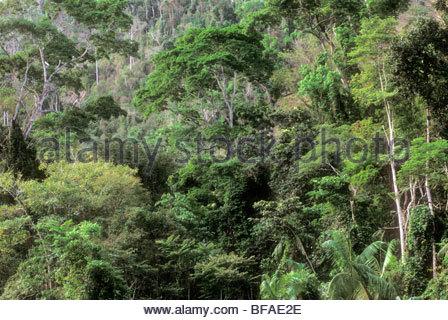 Foresta pluviale atlantica, Montes Clarisse, Brasile Immagini Stock