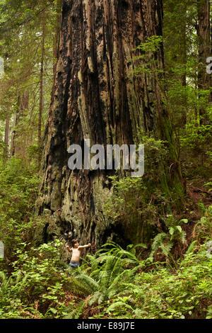 Ragazzo in piedi nella parte anteriore del gigantesco albero di sequoia Immagini Stock