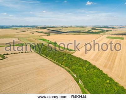 Paesaggio di antenna di estate di frumento e di orzo di raccolti di campo per il raccolto, foresta di alberi da bosco e cielo blu in agriturismo Immagini Stock
