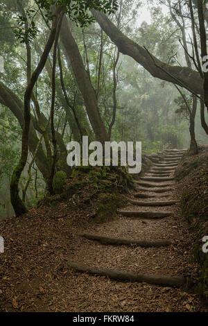 Parco Nazionale di Garajonay è coperta dalla nebbia foreste di alloro. La Gomera, isole Canarie, Spagna. Immagini Stock