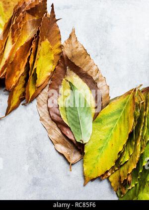 Foglie in sfumature di autunno Immagini Stock