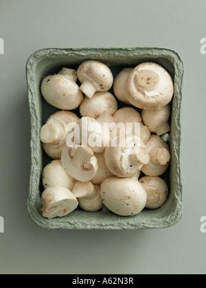 Funghi prataioli in biodegradabile compostabile vassoio shot con professionisti di medio formato digital Immagini Stock