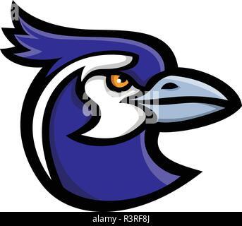 Icona di mascotte illustrazione della testa di un black-throated magpie-jay (Calocitta colliei), una lunga coda di gazza-jay del nord del Messico a visione laterale Immagini Stock