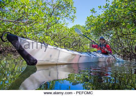 Una spedizione fotografo pagaie oltre il mare l'erba e matita coral in mangrovie lagunare di Isla Bastimientos, Panama. Immagini Stock