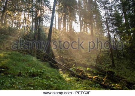 La luce del mattino in Red Bluff Bay. Immagini Stock