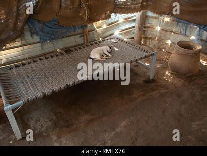 Cat dormire su un letto tradizionale, Mar Rosso Stato, Suakin, Sudan Immagini Stock