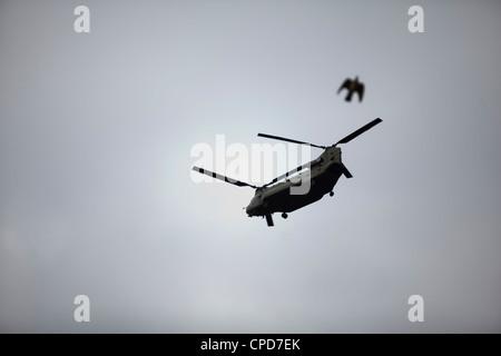 Un elicottero militare volare nel cielo come un uccello vola da Immagini Stock