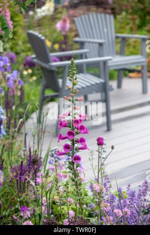 Digitalis purpurea. Foxglove su un giardino mostra a flower show. Regno Unito Immagini Stock