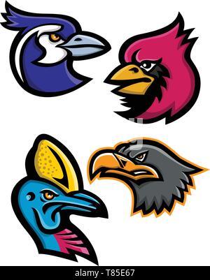 Icona di mascotte Illustrazione gruppo di teste di uccelli selvatici come il nero throated magpie, cardinale, casuario e l'aquila europea visto dal lato su Immagini Stock