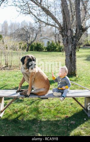 Baby boy e dog sitter su banco Immagini Stock