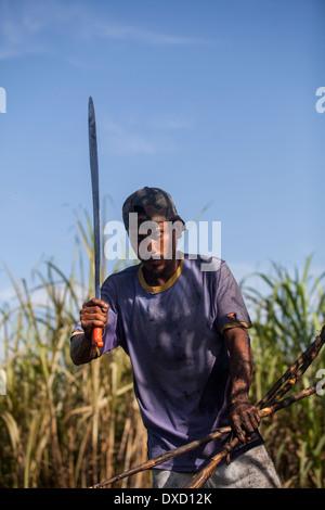 Un coltivatore di canna da zucchero di canna dei raccolti con un machete Immagini Stock
