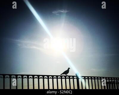 Sole splende come una colomba posatoi in barre di metallo parete in Grazalema, Cadice, Andalusia, Spagna Immagini Stock