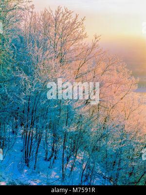 Alberi ghiacciati all'alba, alto Mississippi National Wildlife Refuge, Iowa, Pikes Peak del Parco Statale di Immagini Stock